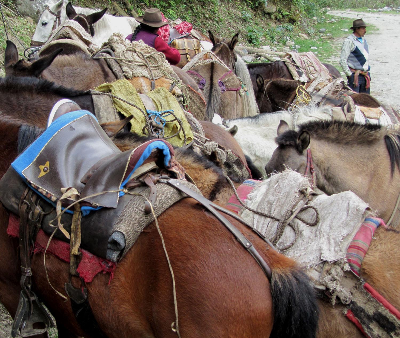 Peru-Salkantay-Trek-Day5-Horses