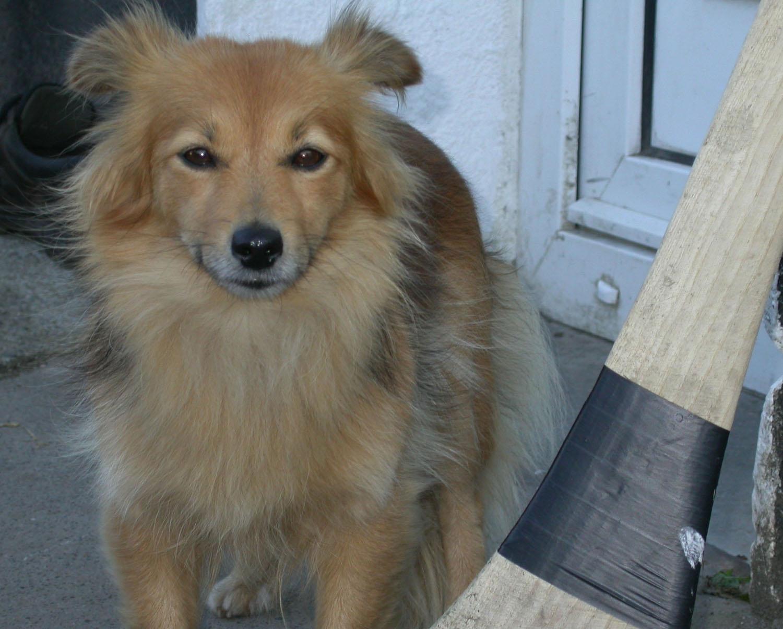 Ireland-Animals-Dog-Trixie-Closeup
