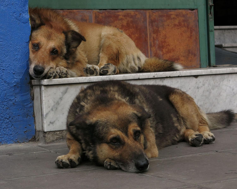 Argentina-Buenos-Aires-La-Boca-Dogs