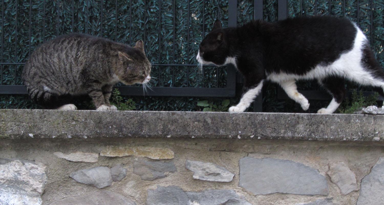 Camino-De-Santiago-Animals-Cats