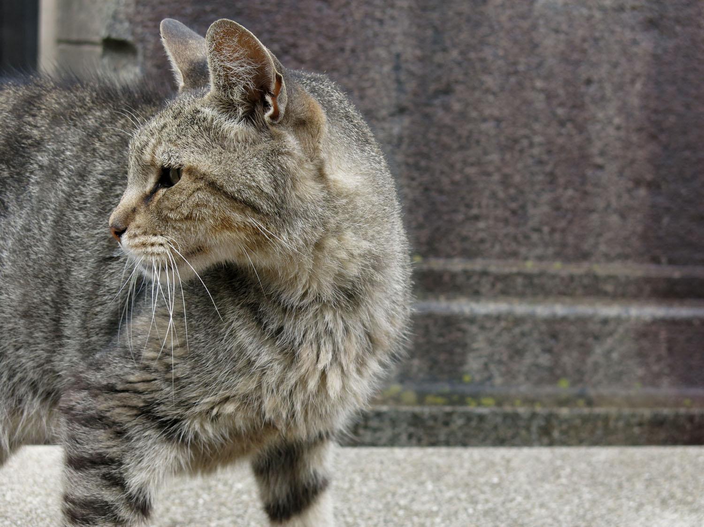 Argentina-Buenos-Aires-Street-Scenes-Cat