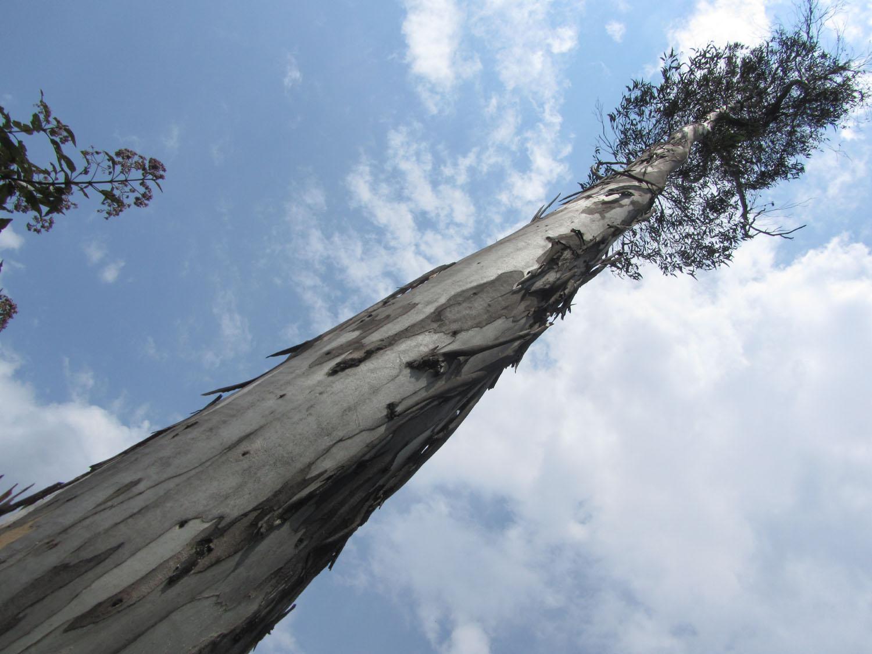 Peru-Salkantay-Trek-Day6-Tree