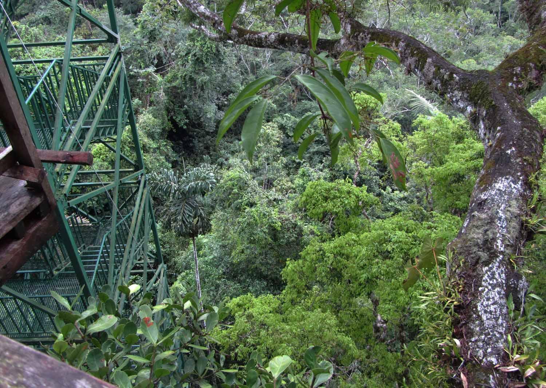 Amazon-Flora-400-Year-Old-Tree