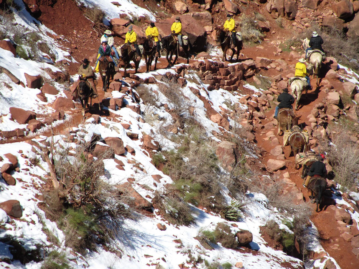 Grand-Canyon-Hike-Out-Mule-Train