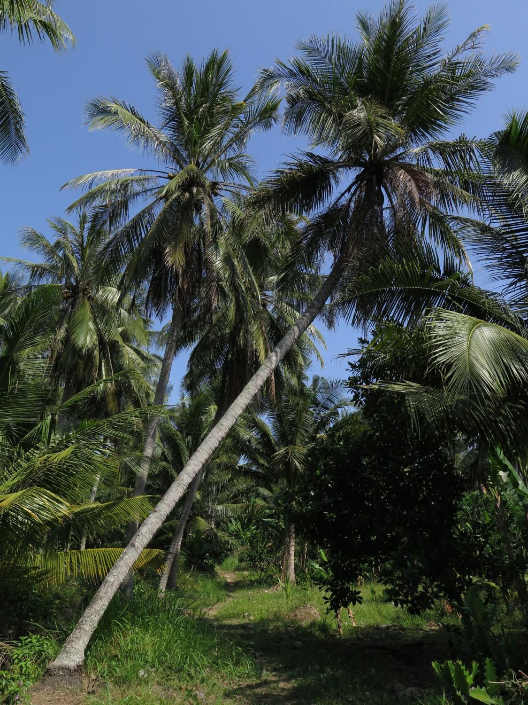 Vietnam-Mekong-Delta-Palm-Trees