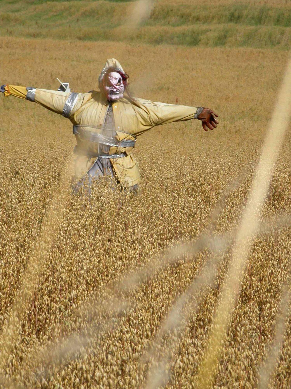 Scotland-Orkney-Scarecrow