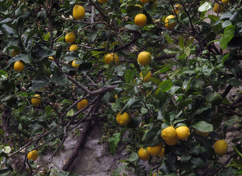 Italy-Cinque-Terre-Street-Scenes-Lemons