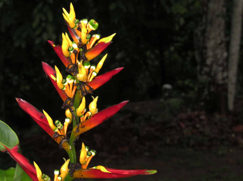 Amazon-Flora-Flower