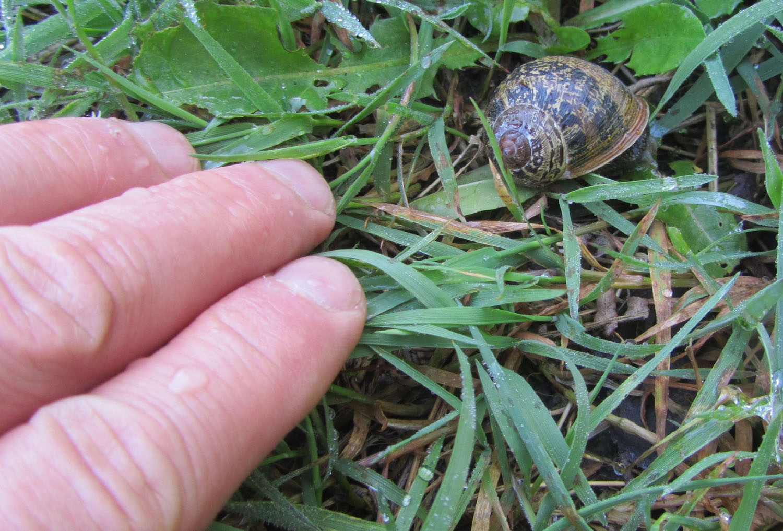 Camino-De-Santiago-Animals-Snail