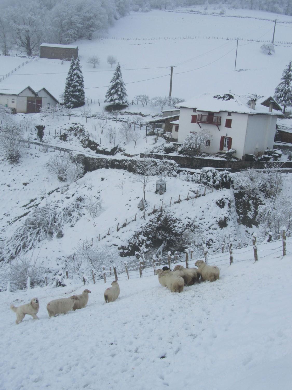 Camino-De-Santiago-Sights-And-Scenery-Pyrenees