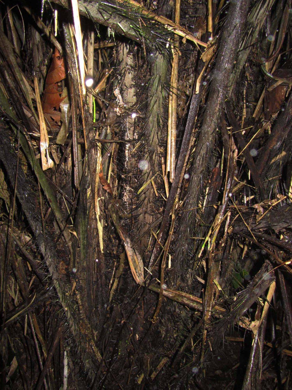 Amazon-Flora-Spikes