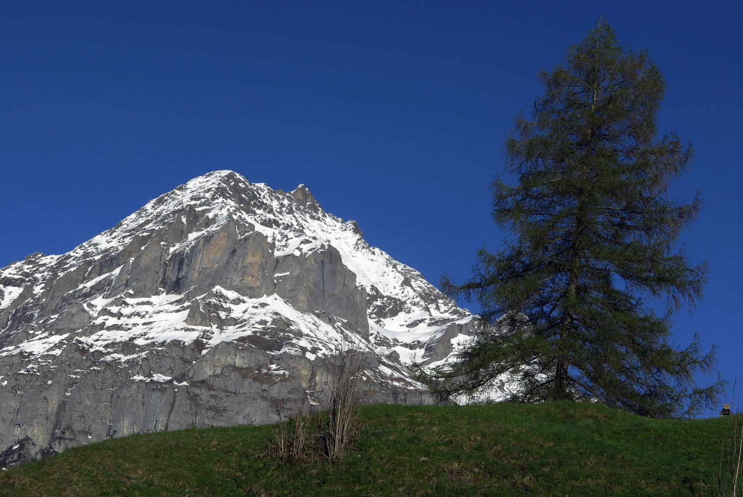 Switzerland-Bernese-Oberland-Grindelwald-Tree