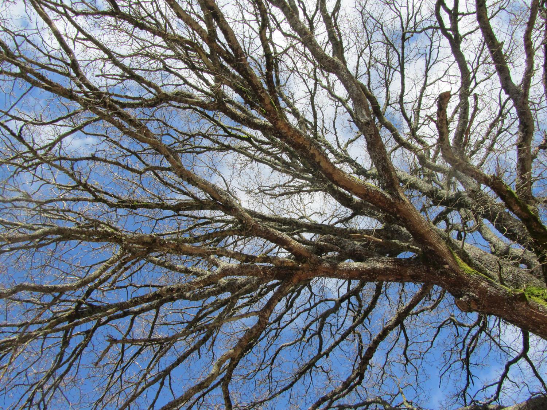 Camino-De-Santiago-Sights-And-Scenery-Trees