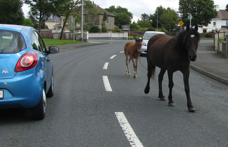 Ireland-Animals-Horses