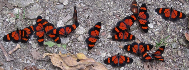 Peru-Salkantay-Trek-Day5-Mariposas