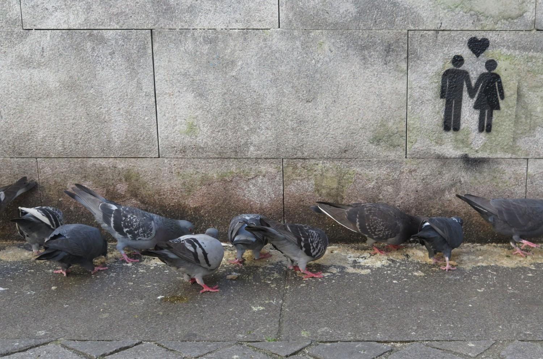 portugal-porto-pigeons