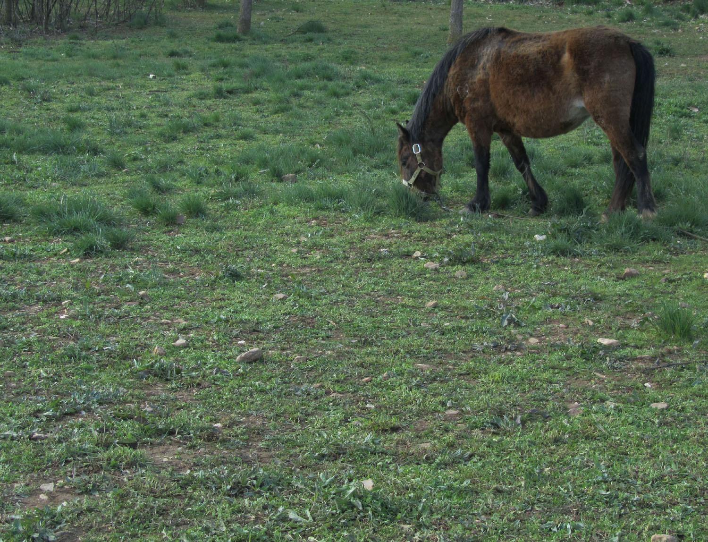 Camino-De-Santiago-Animals-Horses