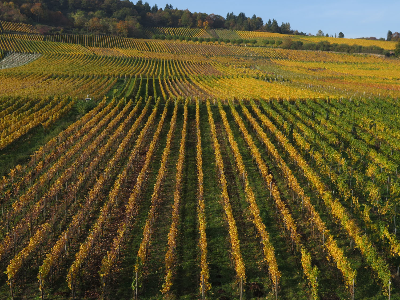 Germany-Rhine-River-Valley-Rudesheim-Vineyards