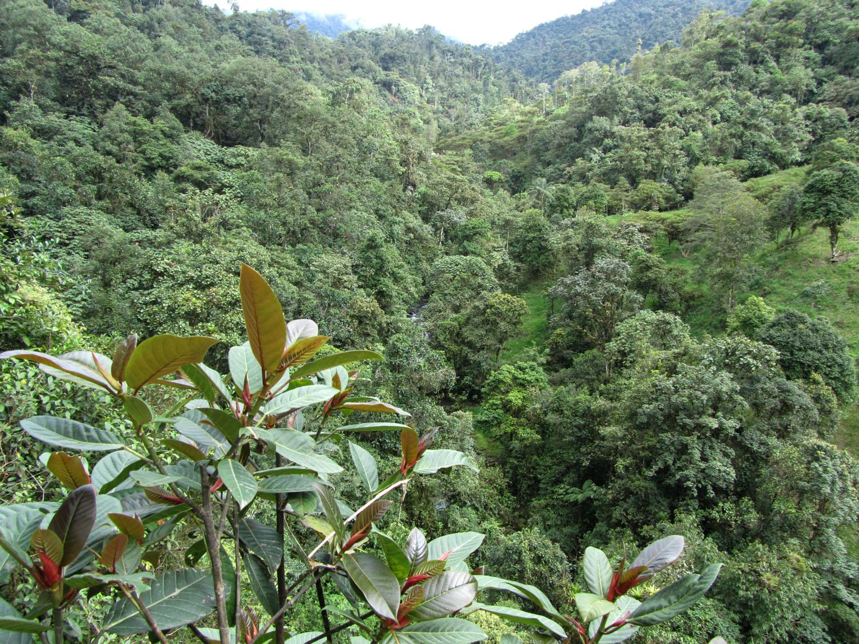 Ecuador-Countryside-Mindo-Valley