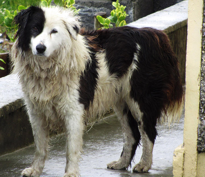 Ireland-Animals-Dog-Aran-Islands