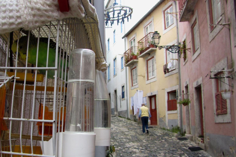 Portugal-Lisbon-Street-Scene-Birds