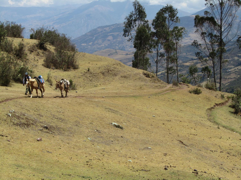 Peru-Salkantay-Trek-Day1-Horses