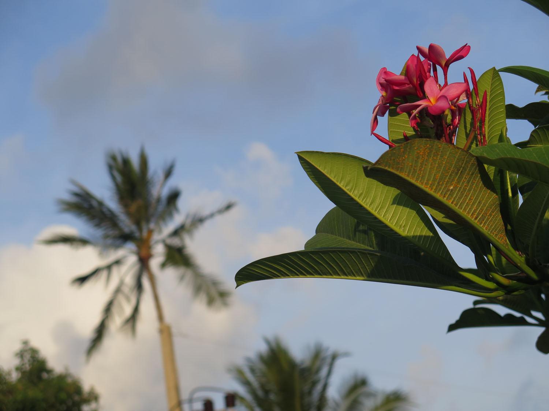 Thailand-Ko-Samui-Flowers