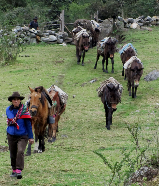 Peru-Salkantay-Trek-Day4-Horses