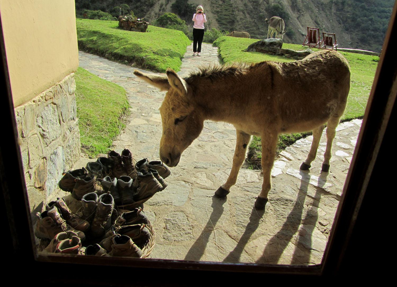 Peru-Salkantay-Trek-Day4-Burro