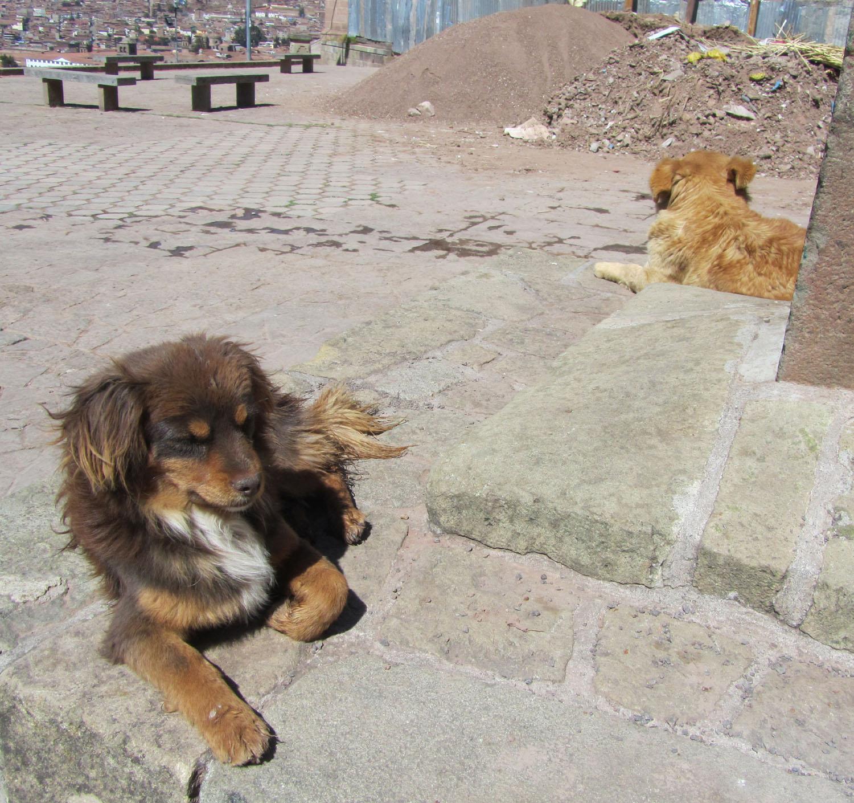 Peru-Cusco-Streets-Dog