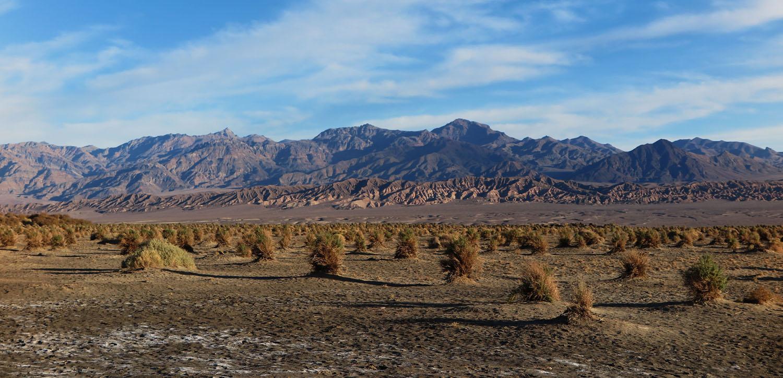 Death-Valley-Devils-Cornfield