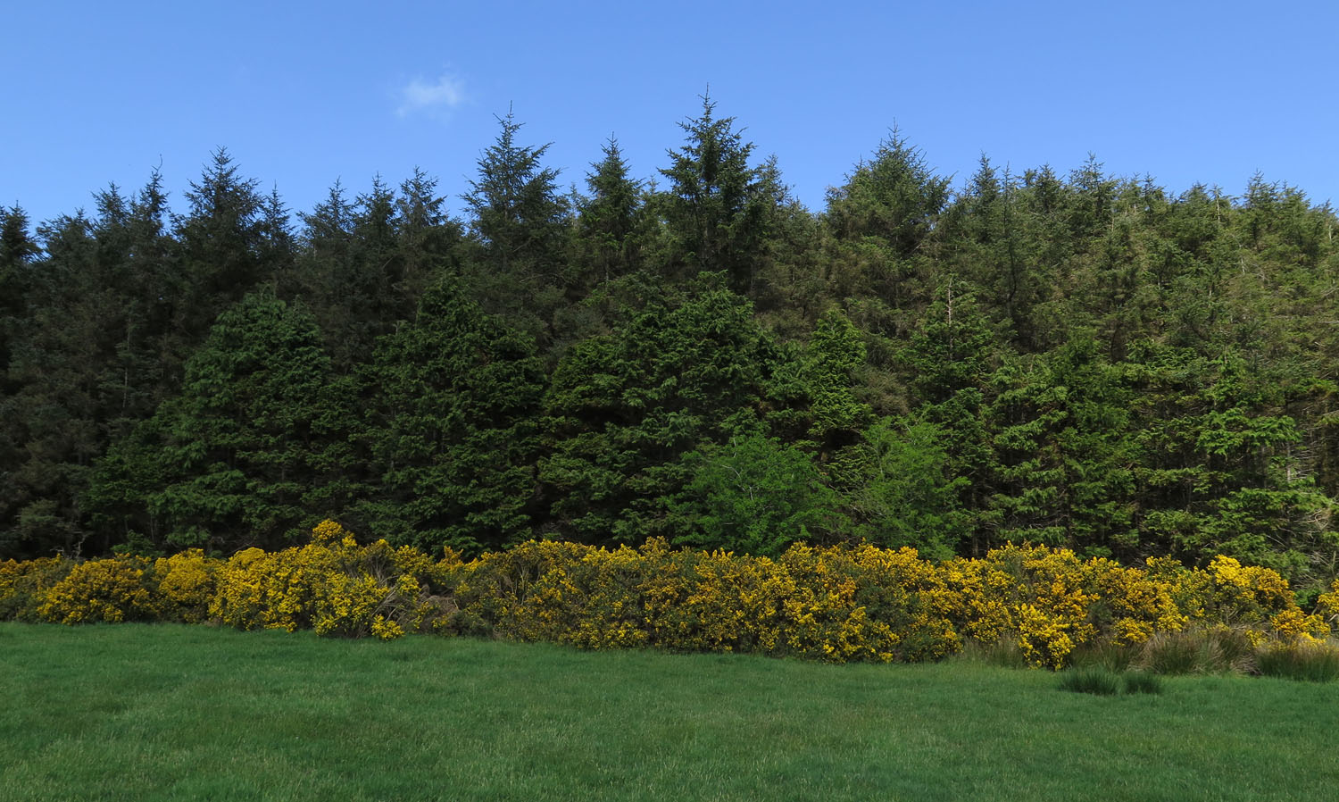 Ireland-Sights-And-Scenery-Trees-Gorse-Grass