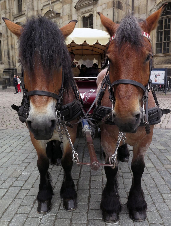 germany-dresden-horses