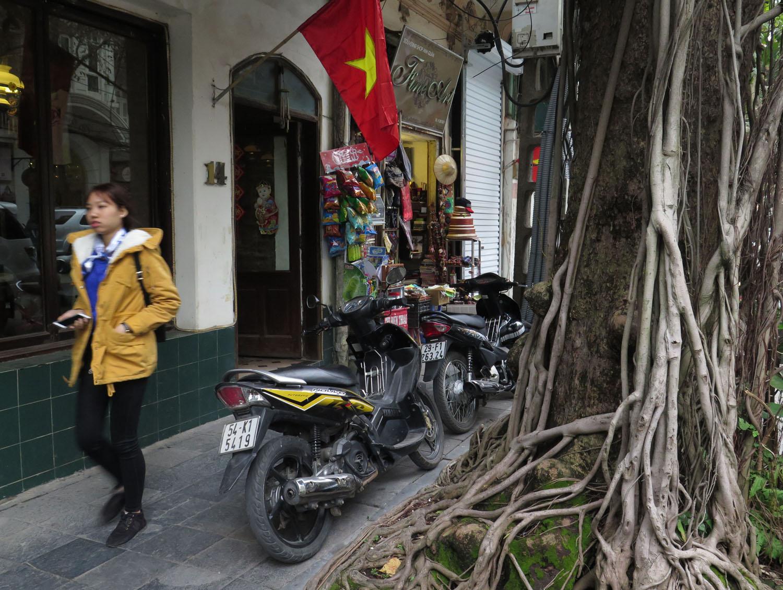 Vietnam-Hanoi-Street-Scenes-Tree