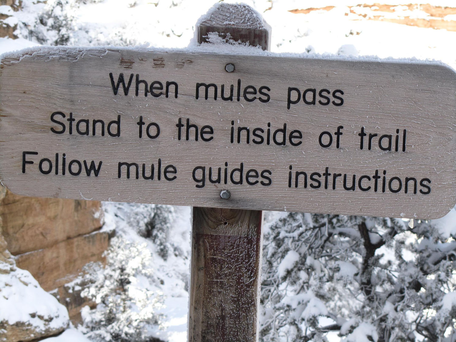 Grand-Canyon-Hike-In-Mule-Rules