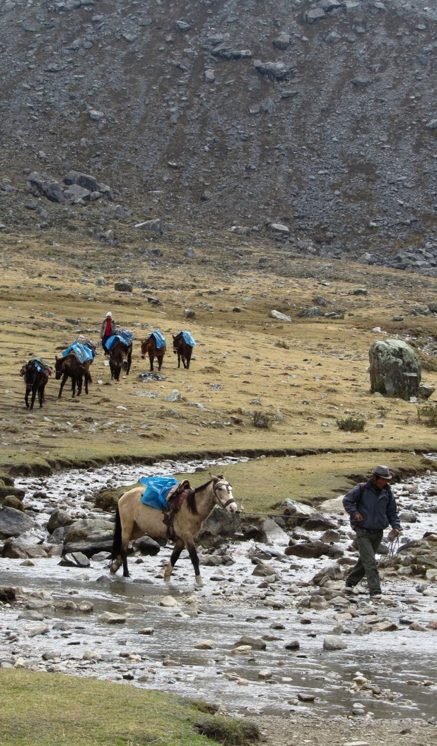 Peru-Salkantay-Trek-Day3-Horses