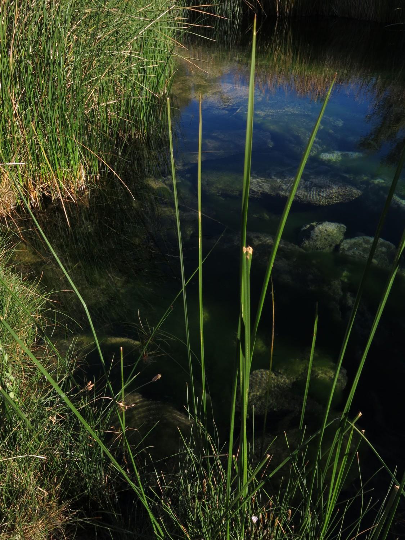 Death-Valley-Ash-Meadows-Spring