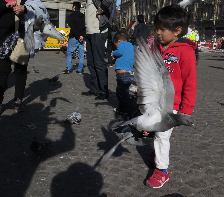 Netherlands-Amsterdam-Street-Scenes-Pigeons