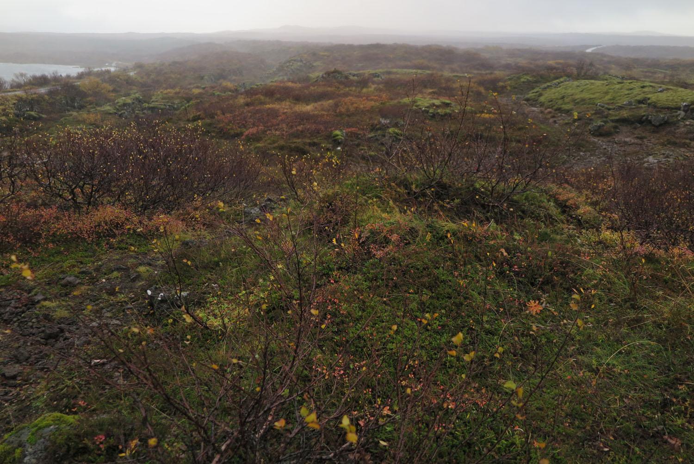 Iceland-Terrain-Tundra