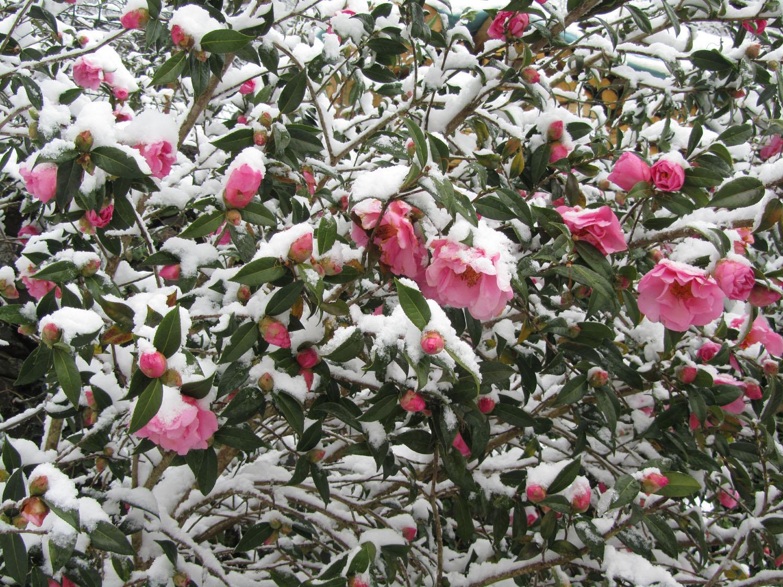 Camino-De-Santiago-Sights-And-Scenery-Snow-Flowers