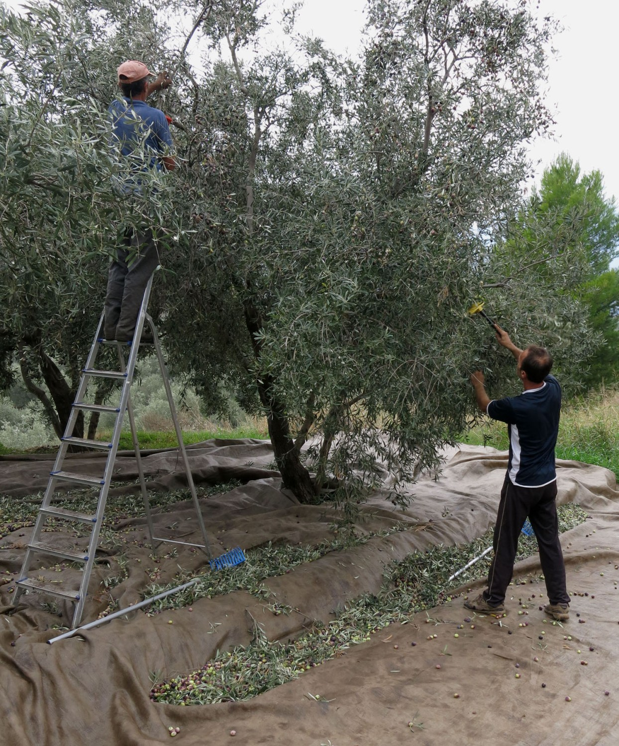 Greece-On-The-Road-Olives