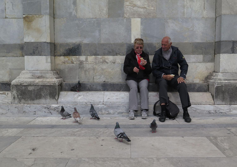 Italy-Pisa-Street-Scenes-Pigeons