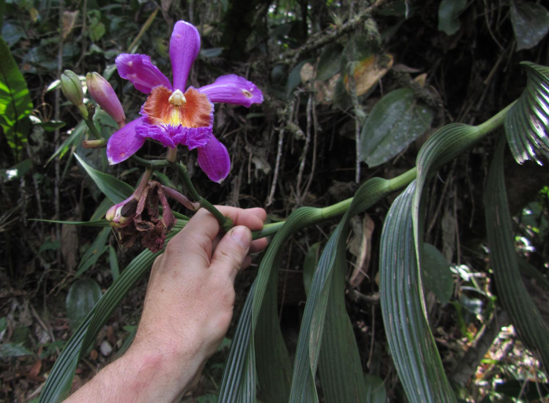 Peru-Salkantay-Trek-Day6-Orchid