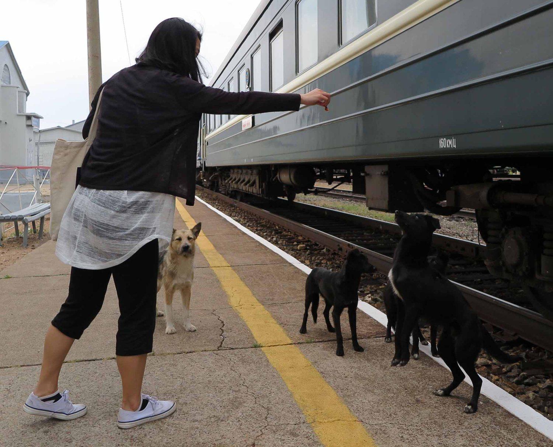 Russia-Trans-Siberian-Railway-Mongolian-Leg-Jen-Dogs