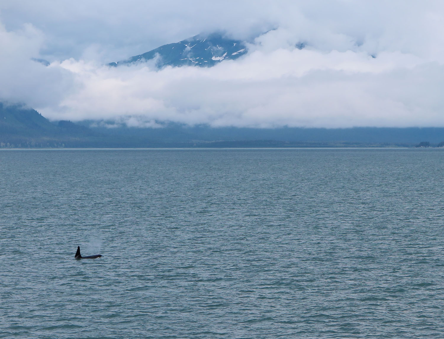 Alaska-State-Ferry-Inside-Passage-Scenery-Orca