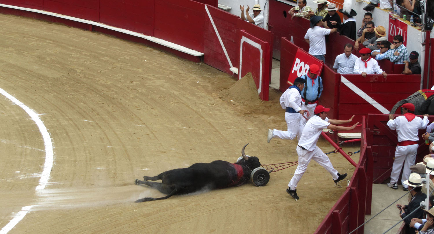 Ecuador-Quito-Bullfight-Aftermath