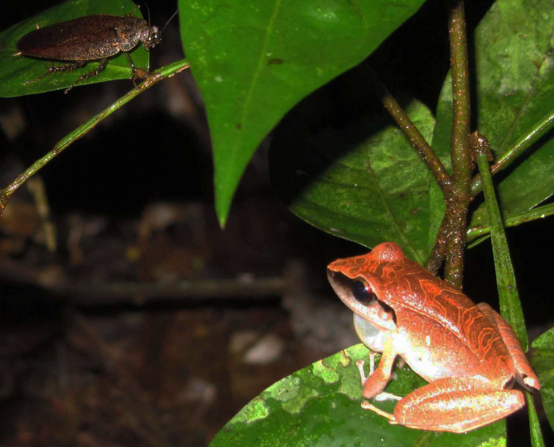 Amazon-Fauna-Frog-Cockroach