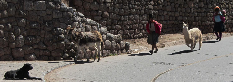 Peru-Cusco-Streets-Llama