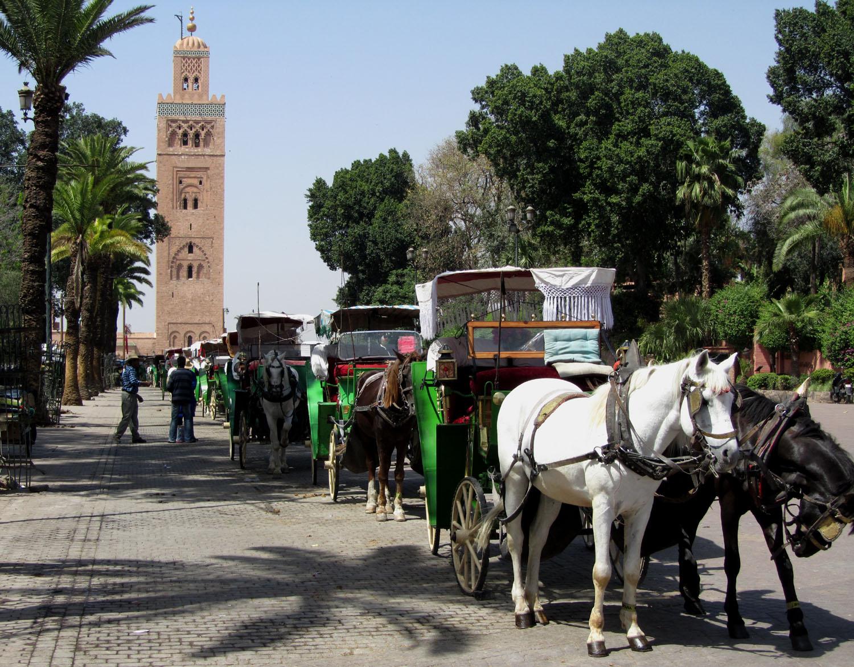 Morocco-Marrakech-Minaret-Horses