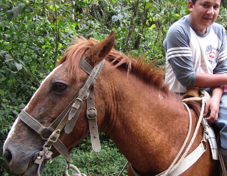 Ecuador-Countryside-Mindo-Hombre-Caballo
